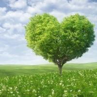 2020, Изумрудное сердце, улун, ч/ф Цзибянь, вакуум-пакет, 250 г